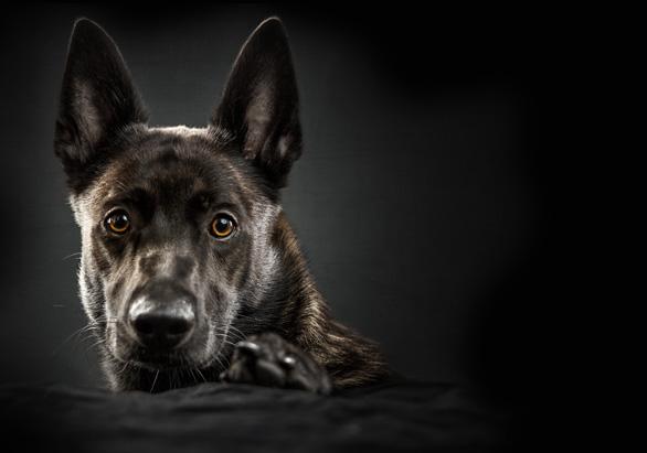 Hund auf der Homepage bei www.aktivdog.ch das natürliche Schweizer Hundefutter