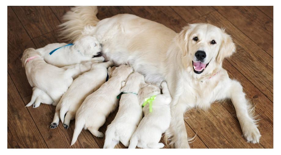 Züchterrabatt bei AktivDog – schweizer Hundefutter
