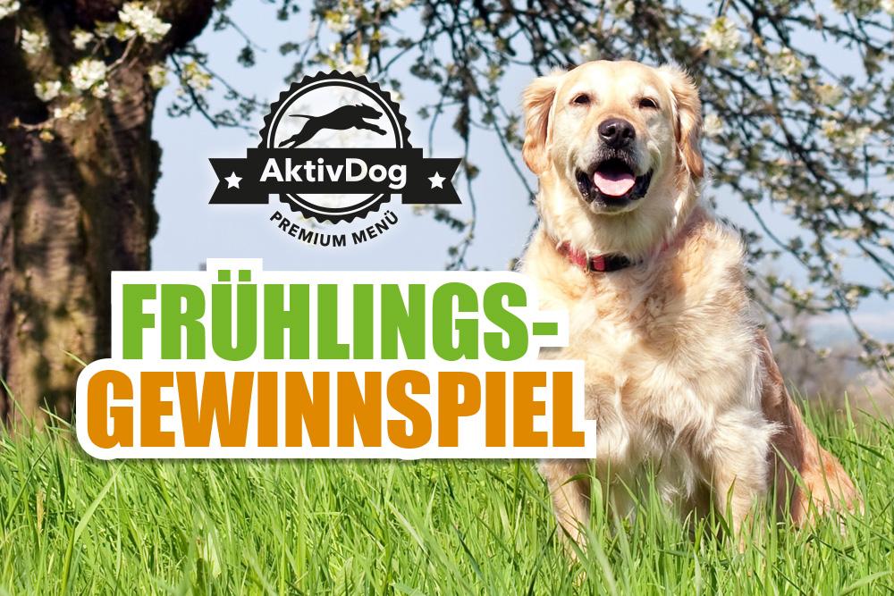 Gewinnspiel: leckeres AktivDog Hundefutter für Ihren Liebling!