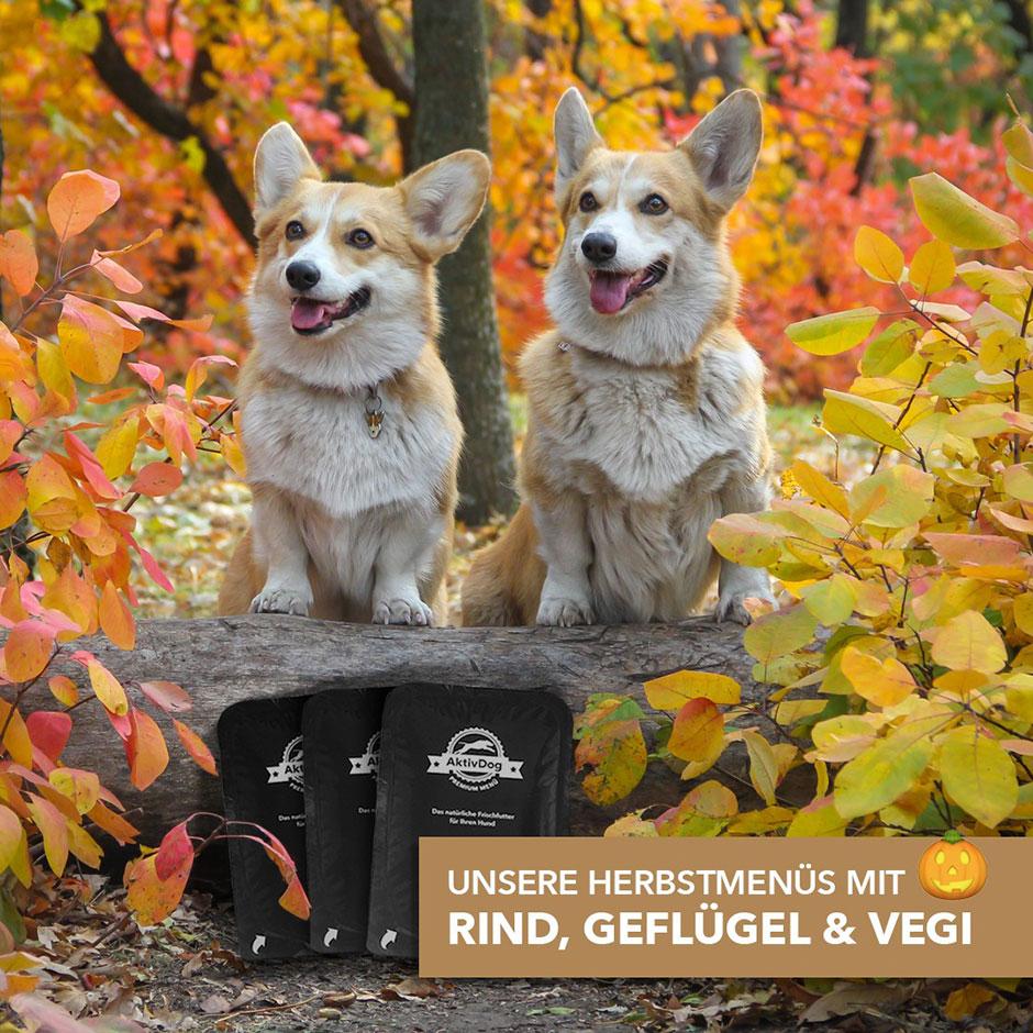 Unsere Herbstmenüs mit Kürbis – AktivDog Rind, Geflügel und Vegi