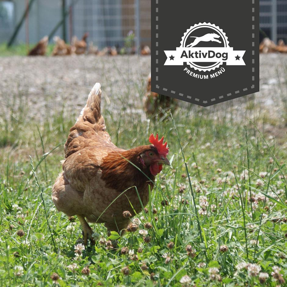 Wir verwenden für unser Futter nur die frischesten Eier von glücklichen Hühnern
