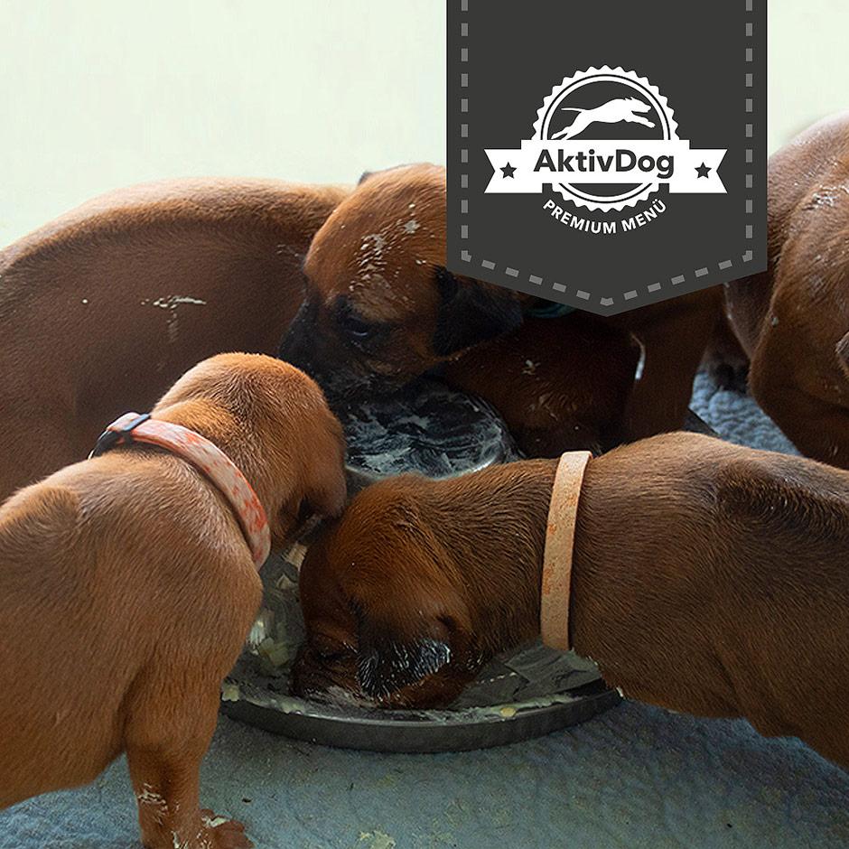 Unsere Kleinen vom Zurimahali Rudel lieben das Welpenfutter von AktivDog